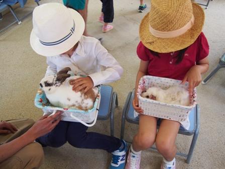 かわいいウサギとモルモット!!